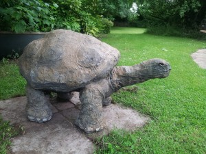 Turtle at haddenham 2