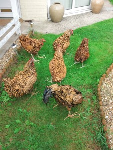 chickens galore 4